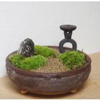 小さな世界で雄大な景色を苔盆栽【古都の趣きある神社の風景(信楽焼茶鉢)】