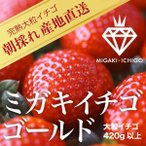 いちご ミガキイチゴ ゴールド(大粒いちご420g以上)