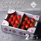 いちご ミガキイチゴ スタンダード(ご自宅用) 2パック 275g以上×2