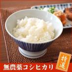無農薬玄米 コシヒカリ 「特選」 5kg 福井県27年産
