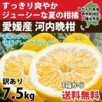 河内晩柑 みかん 和製 グレープフルーツ 訳あり 6kg 送料無料 愛媛産 15〜25個入り