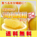 TVで話題の食べる天然ジュース 河内晩柑 (夏文旦)チビちび君10kg・送料無料(愛媛産)