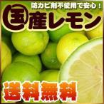瀬戸内産 国産レモン2kg【送料無料】傷あり・不揃い