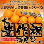 大豊作祝い清見タンゴール10kg×2【送料無料】訳あり・ご自宅用