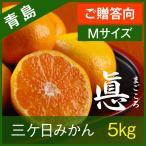 【青島みかん】三ヶ日みかん ご贈答向け 青島 まごころ 【Mサイズ】 5kg