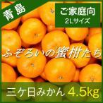【青島みかん】三ケ日みかん ご家庭向け ふぞろいの蜜柑たち 2Lサイズ 4.5kg