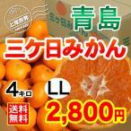 三ケ日みかん贈答用青島LLサイズ(4kg)