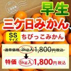 三ケ日みかん早生ちびっこみかん(SSサイズ)(6kg) 50%オフ