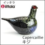 イッタラ バード オイバ トイッカ iittala オオライチョウ Capercaillie 3790 ヨーロッパ Birds by Toikka