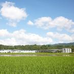 高橋酒造 白岳 米 20度 パック 焼酎 熊本県 1800ml