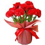 ソープフラワー カーネーション花鉢 誕生日 敬老の日 お祝い 鉢花 鉢植え プレゼント ギフト カーネーション フレグランスフラワー 花 (レッド)