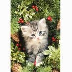 猫のクリスマスカード グレッグ・カディフォード ひいらぎと子猫
