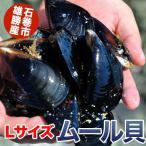 朝獲れ活ムール貝 Lサイズ(1粒:8cm〜10cm未満)1kg〜産地直送/鍋料理にも最適
