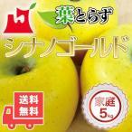 送料無料 青森県産 葉とらず シナノゴールド ご家庭用5kg (約14〜18個)人気の訳ありリンゴ 青森産 訳あり