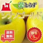 送料無料 青森県産 葉とらず シナノゴールド ご贈答用5kg (約14〜18個)プレミアムリンゴギフトに最適 青森産
