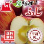 送料無料 青森県産 葉とらず ふじ ご家庭用5kg (約14〜18個)人気の訳ありリンゴ 青森産 訳あり サンふじ