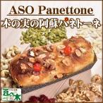 木の実の阿蘇パネトーネ 道の駅阿蘇 パン工房豆の木 イタリア 伝統菓子 産地直送