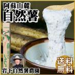 お歳暮 熊本 阿蘇 ギフト 自然薯 山芋 1.2kg 縁起もの 山菜の王者 岩下自然薯農園