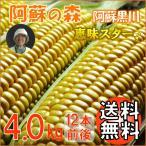 とうもろこし 熊本 阿蘇 お中元 ギフト スイートコーン 阿蘇の森 恵味スター 4.0kg