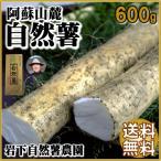 自然薯 熊本 阿蘇 ギフト 山芋 600g 縁起物 山菜の王者 長芋より高価 岩下自然薯農園【冷蔵】夏秋限定