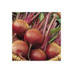 【有機種子】野菜の種「ビーツ  ビート (デトロイト )」(1.90g)