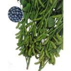 エダマメ種 快豆黒頭巾 (100ml) [栽培用 種子 黒えだまめ 黒枝豆]