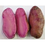 【数量限定入荷】【予約販売 12月下旬発送開始予定】ノーザンルビー じゃがいも種芋 (1kg)サイズ混合 [春ジャガイモ 馬鈴薯 ばれいしょ 栽培用]