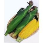 トウモロコシ種 おひさまコーン7 (60粒) [栽培用 種子 とうもろこし 玉蜀黍 スイートコーン]