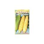 トウモロコシ種 F1 ミルフィーユ(2000粒) [栽培用 種子 とうもろこし 玉蜀黍 スイートコーン 生産者向け]