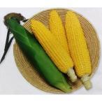 トウモロコシ種 おひさまコーン88 (2000粒) [栽培用 種子 とうもろこし 玉蜀黍 スイートコーン 生産者向け]