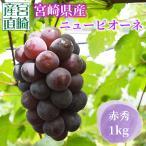 【8月17日より発送開始】平均糖度17度以上!宮崎産ニューピオーネ1Kg 種なし(8月下旬〜9月下旬)送料無料 化粧箱 産地直送 ブドウ ぶどう ギフト