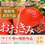 規格外 訳あり わけあり 送料無料 380g以上(1粒あたり18〜23g) いちご イチゴ 苺 高級 大きくて甘い おおきみ ギフト プレゼント 1月中旬以降順次発送予定
