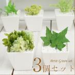 プリザ・グリーンの観葉植物 プチグリーン3個セット