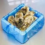 殻付きカキ 殻付牡蠣 カキ 生鮮 加熱用 宮城県産 三陸産 100K入り