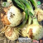 有機玉ねぎ・有機栽培・有機JAS・埼玉県産10kgM・Lサイズ【送料無料】