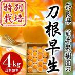 奈良県産 特別栽培(減農薬50%減・無化学肥料)柿刀根早生(とねわせ)4kg 【送料無料