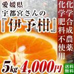 無農薬・無化学肥料歴35年・愛媛県産伊予柑(2L〜Lサイズ混合)5kg 【送料無料】
