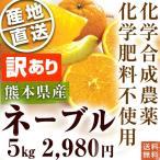 熊本県産・国産ネーブルオレンジ(訳あり品・規格外・B品・サイズ混合)10kg【送料無料】