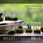 苔テラリウム 鉱物と苔 植物 ギフト プレゼント レビューでおまけ 定形外OK