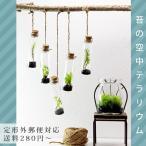 苔テラリウム3個セット 植物 ギフト プレゼント レビューでおまけ 定形外OK