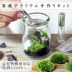 苔庭テラリウム手作りキット 植物 ギフト プレゼント レビューでおまけ 定形外OK