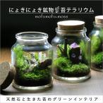 鉱物 苔テラリウム 植物 ギフト プレゼント レビューでおまけ