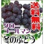 岡山特産「真冬のぶどうグローコールマン」(1kg)...
