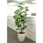 光触媒観葉植物で、快適さとやすらぎの空間造りをお手伝い!