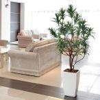 Yahoo!光の楽園ショップ モントブレッテ光触媒人工観葉植物(インテリアグリーン) フレッシュドラセナW 1.8m、新商品