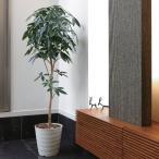 Yahoo!光の楽園ショップ モントブレッテ光触媒人工観葉植物 デザインパキラ 1.6m、新商品