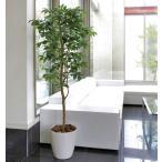 Yahoo!光の楽園ショップ モントブレッテ光触媒人工観葉植物 光の楽園 アルデシア(万両)1.6m、新商品