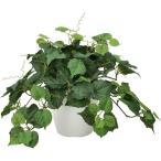 Yahoo!光の楽園ショップ モントブレッテ光触媒観葉植物テーブルタイプ(人工植物) グレープ、新商品