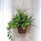 光の楽園(光触媒人工観葉植物)壁掛けナチュラルグラス