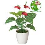 かわいい光触媒観葉植物で、やすらぎの空間造りをお手伝い!